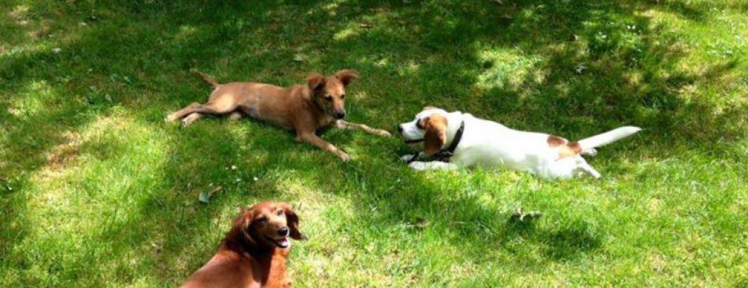 Pension et Garde chiens et chats dans le 77 - Seine-et-Marne - Ile-de-France