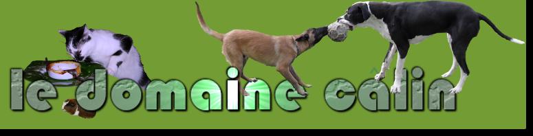 Le domaine câlin, pension, garde chiens et chats à Chelles - 77 Seine-et-Marne - Ile de France - sans boxe